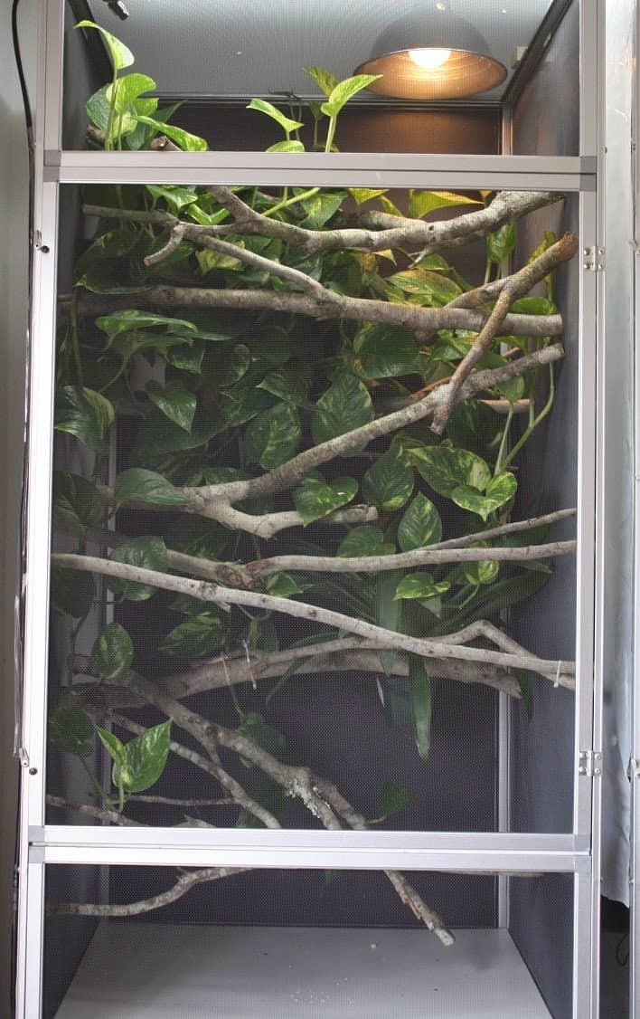 decorar terrario de un camaleón con troncos
