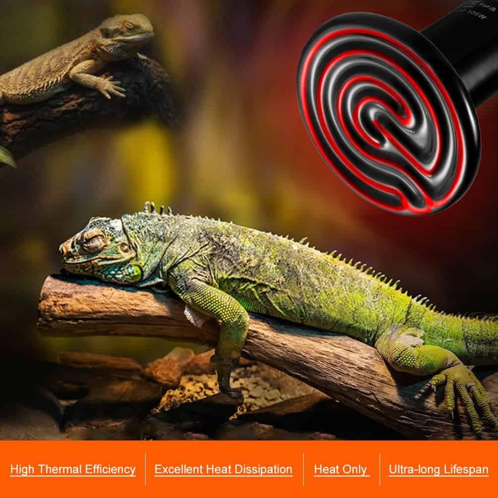 spot cerámico para camaleón