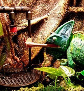 sistema de goteo para camaleones