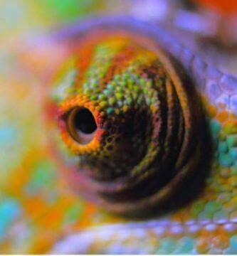 el ojo del camaleon