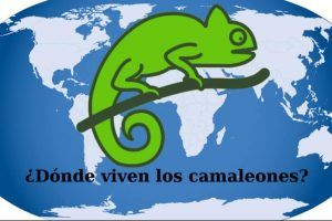 donde viven los camaleones